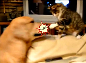 Kitten Takes On Dog 5x His Size In #EPIC Battle For Couch Real Estate. Who Wins?