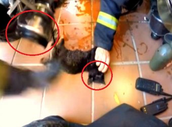 Watch Brave Spanish Firefighters Rescue And Revive Four Kittens Trapped In A Massive Fire