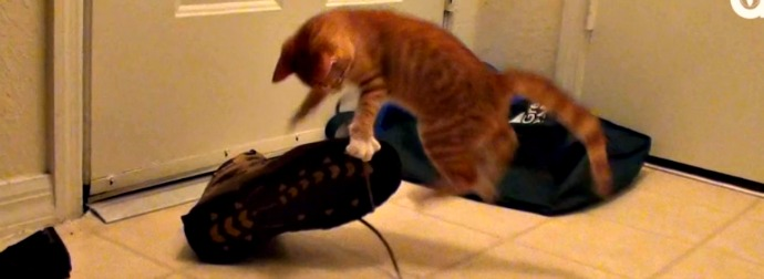 Orange Kitten Does Ninja Style #EPIC Takedowns of Shoes And Sneakers [VIDEO]