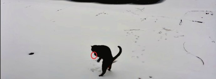 This Cat Went Out Into The Snow For The Very First Time And Her Experience Is Truly Awesome!