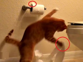 Watch These 2 Kittens Take Turns Destroying The Toilet Paper