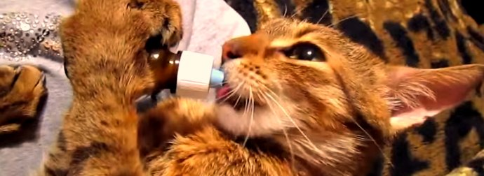 Cat Makes Funny -- And Sometimes Bizzare -- Sounds Getting High On Catnip