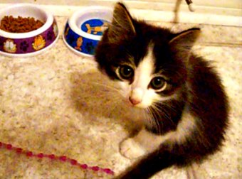 A Cruel Birth Defect Left Him With Only 2 Legs, But This Kitten Hasn't Let That Stop Him!