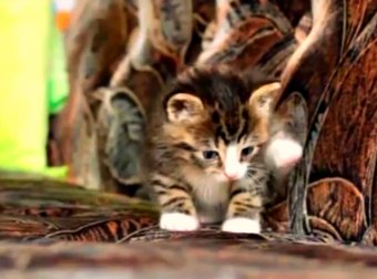 Adorably Cute Moments in the Life of a 5 Week Old Kitten Called Nikita