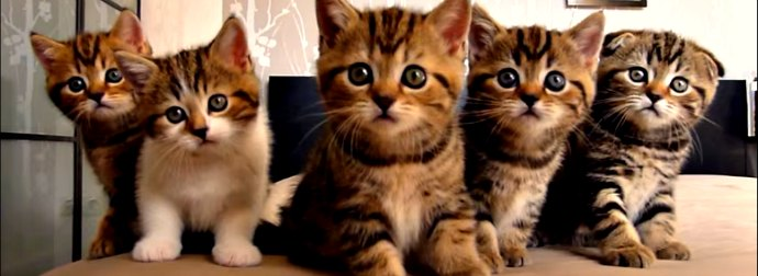 Watch This Incredible Video Of Kittens Dancing To Music In Perfect Synchronization