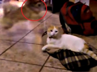 Watch This Hilarious Compilation Of Cats Stealing Dog Beds
