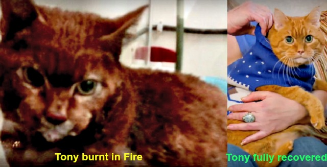 tony the hero fire cat fairborn ohio rescue